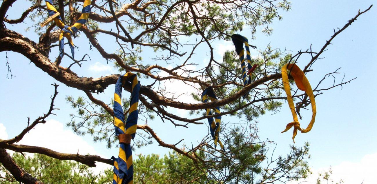 Pfadfinder-Halstücher hängen im Baum